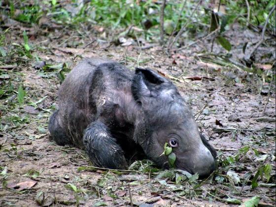 Newborn baby Andatu :)