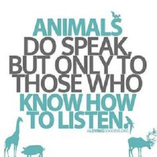 Animals speak to those who listen.