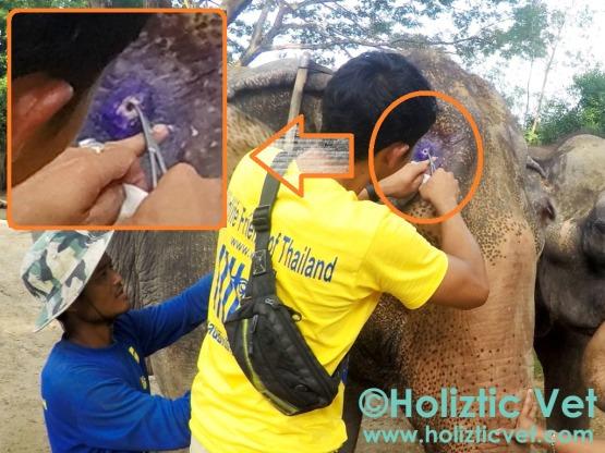 elephant bull hook