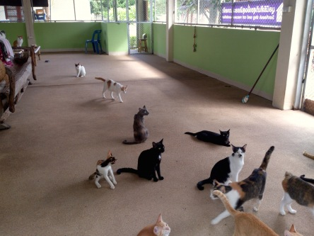 santisook cat shelter