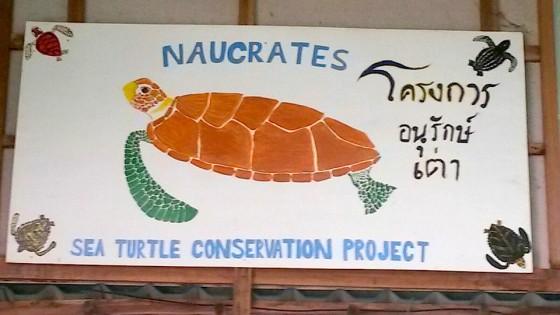naucrates turtle painting.jpg