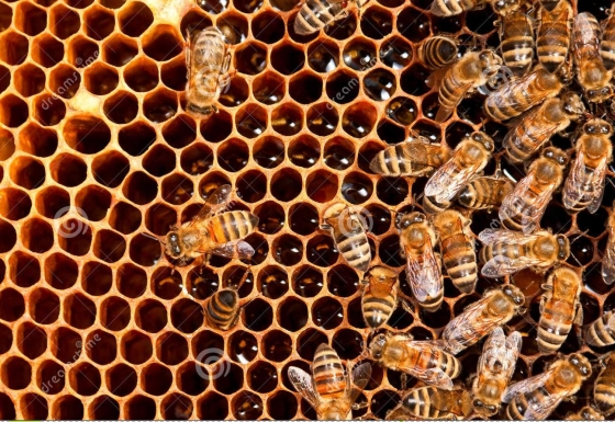 insects-bee-working-21721367.jpg